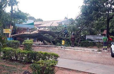 Hospital en apuros por caída de árbol