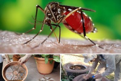 Estos son los distritos con más casos de Dengue registrados