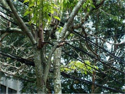 Joven muere electrocutado al intentar podar un árbol