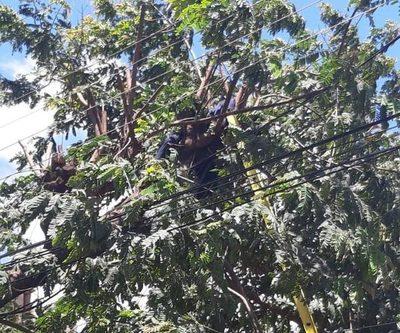 Joven muere electrocutado mientras podaba un árbol