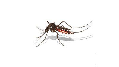 Epidemia de dengue: un posible negociado