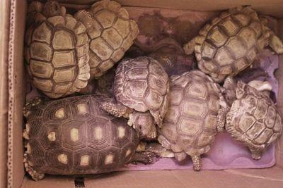 Rescatan tortugas, loros y cotorras del Mercado 4