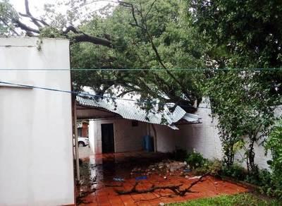 Tormenta: Árbol cae sobre una casa en Julio Correa •