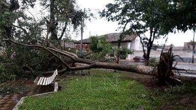 Árboles caídos y viviendas destechas, saldo de tormenta en San Pedro
