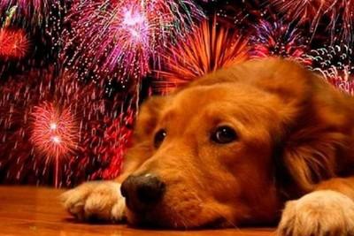 Fuegos artificiales: ¿Qué hago si mi perro sufre una crisis?