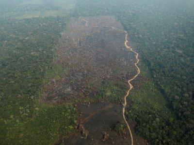 El Amazonas podría llegar a ser una sabana tropical