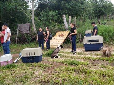 Rescatan a 22 perros de un criadero clandestino de Curuguaty