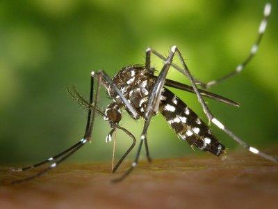 La ruta del dengue: Asunción y Central, zonas con más casos