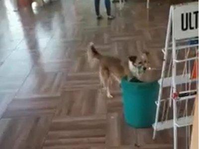 Pelusa, la perrita que pone la basura en su lugar