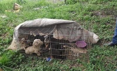 HOY / Allanan criadero clandestino: 26 animales fueron rescatados