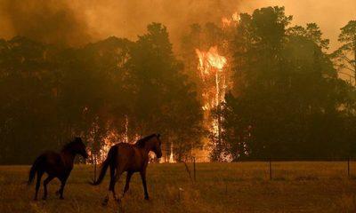 La desgarradora cifra de animales muertos a causa de incendios en Australia