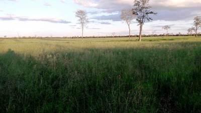 """""""La ganadería chaqueña encara una etapa de modernización e intensificación""""."""