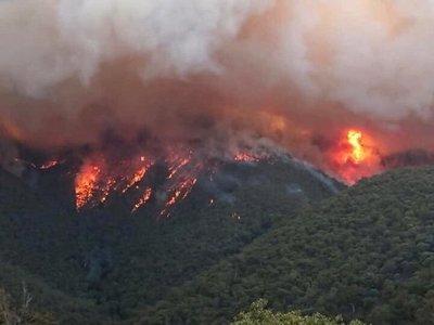Artistas y deportistas hacen millonarios donativos por incendios en Australia