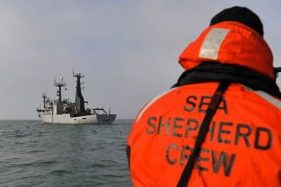 Los delfines, víctimas colaterales de la pesca en el golfo de Vizcaya