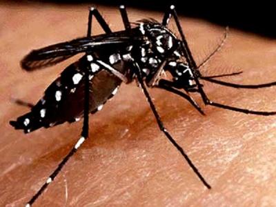 MSP no declarará aún emergencia sanitaria por dengue