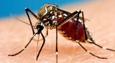 HOY / Lejos del foco principal del dengue, Concepción también es azotada por la plaga