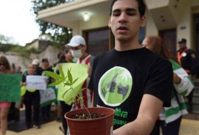 Mamá Cultiva regalará 1.000 plantines de cannabis en serenata a las madres