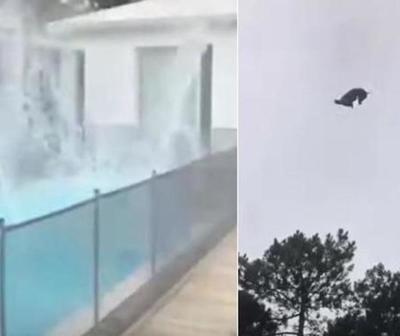 Indignante. Lanzaron un cerdo a una piscina desde un helicóptero