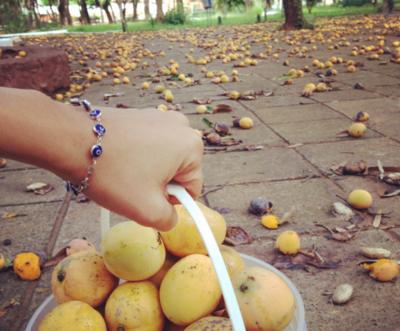 Voluntarios prevén llevar mangos a niños nativos del Chaco