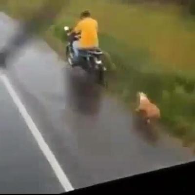 Denuncian a hombre que arrastró a un perro desde su motocicleta
