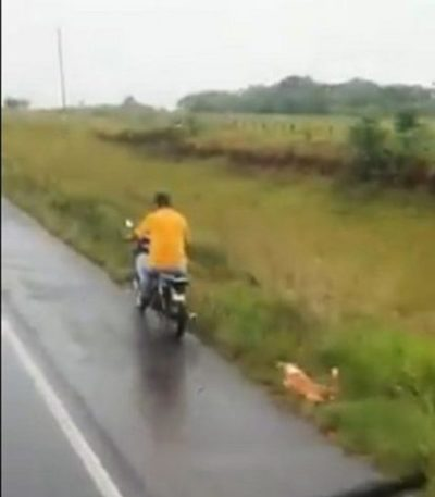 Fiscalía imputa a hombre por arrastrar a un perro en Misiones.