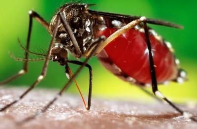 No registran casos confirmados de dengue en Caaguazú