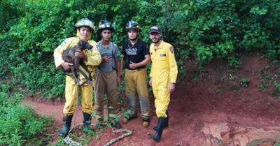 Los bomberos  rescataron a  un animalito