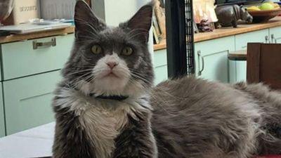 Mujer gastó USD 26.000 en un juicio contra su vecina para ver quien se quedaba con un gato
