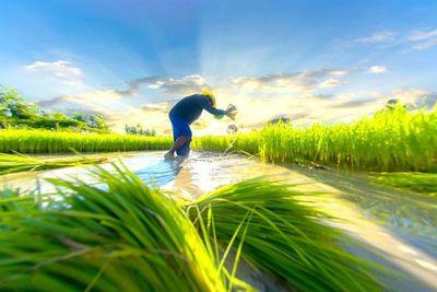 La exportación de arroz pegó un salto en la última década