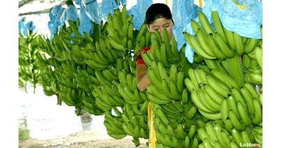 Paraguay, con potencial para ser un referente mundial en frutas
