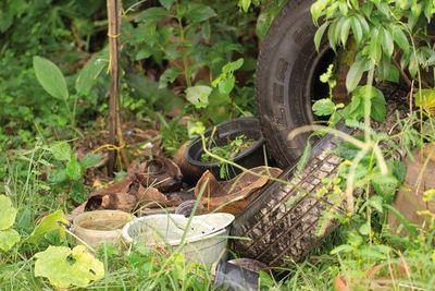 Dengue: Senepa pide colaboración de gobernaciones y municipios para destrucción de criaderos