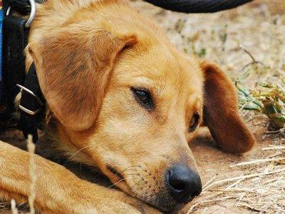 Denuncian a un hombre por ahorcar a su perro por nervios