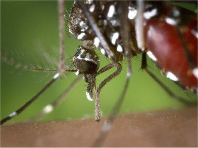 Anuncian aumento y diseminación del dengue