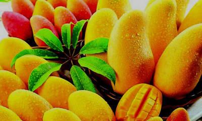Extienden el Festival del Mango por pedido de la ciudadanía