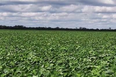 El cultivo de la soja alcanzaría en el Chaco las 48.000 hectáreas esta temporada