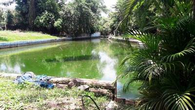 Ex balneario convertido en un gran criadero de mosquitos •