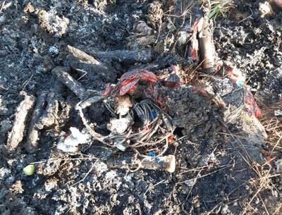 Criminal: queman basura patológica en plena playa de Chaco´i