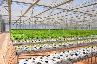 Empresa itaugueña implementa tecnología extranjera para mejorar la producción frutihortícola