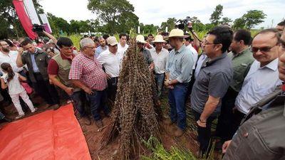 San Pedro: lanzan campaña de cosecha de sésamo con presencia de Marito