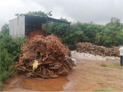 Intervienen matadero clandestino de caballos en Luque