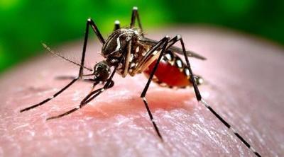 Dengue: Letal inacción de autoridades y ciudadanía