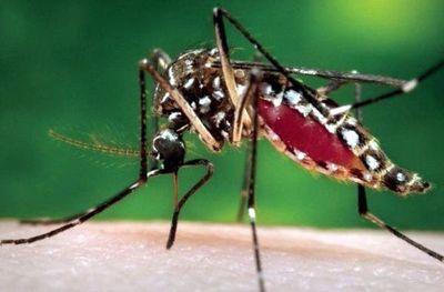 Dengue en febrero: ¿Ya revisaste tu patio hoy?