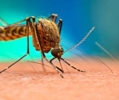 Dengue, demoras y nervios en hospitales de Central