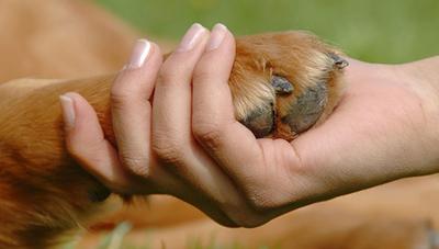 Del presupuesto 2020 de la Dirección de Protección Animal, solo el 10 % se destina a los animales, según activista