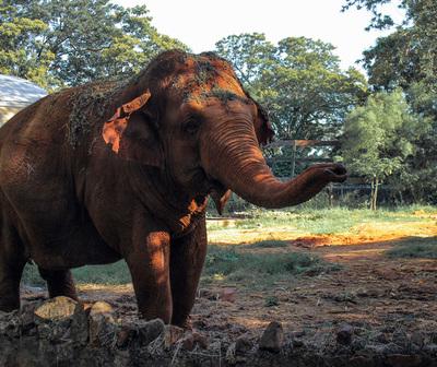 Concejal propone cerrar el zoológico