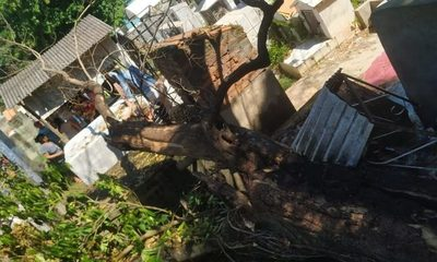 Deplorable estado de cementerio en Franco