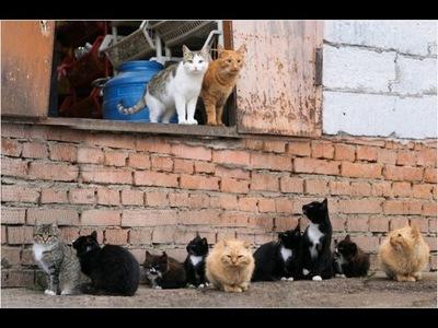 DESCUBREN 130 GATOS EN UN APARTAMENTO DE MOSCÚ