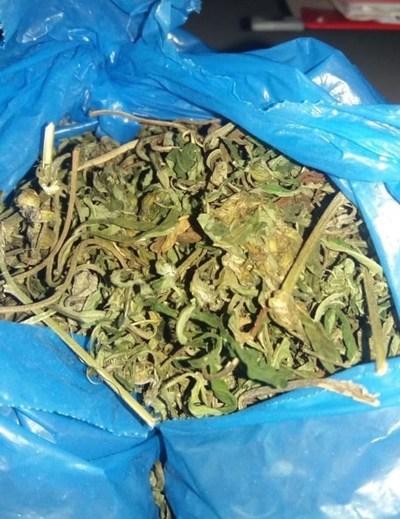 Intentan ingresar hojas de marihuana en granja penitenciaria