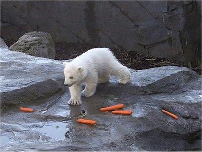 El zoo de Viena presenta una cría de oso polar, la primera en 12 años