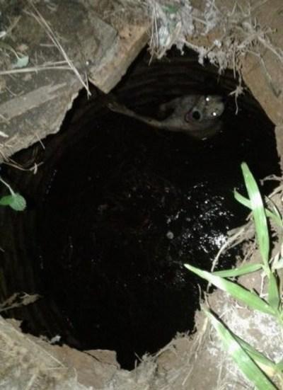 San Lorenzo: Perrita que cayó a un pozo fue rescatada por bomberos